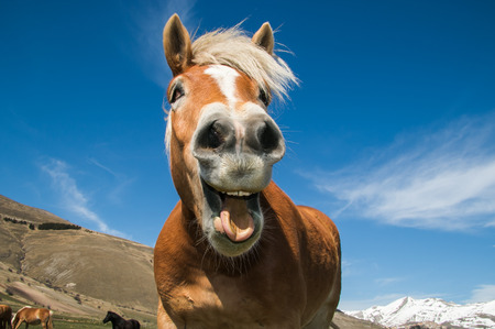 Customer insights straight from the horse's mouth